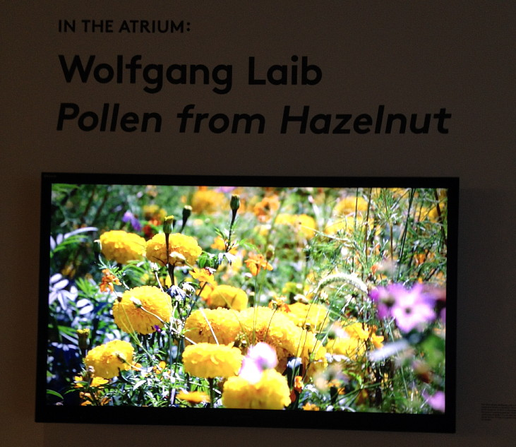 turns out to be a square of pollen laid down by Wolfgang Leib