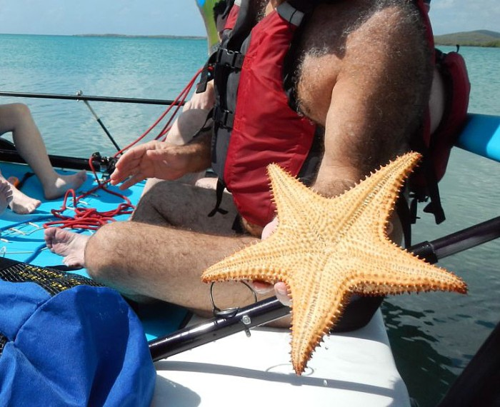 and a giant starfish!