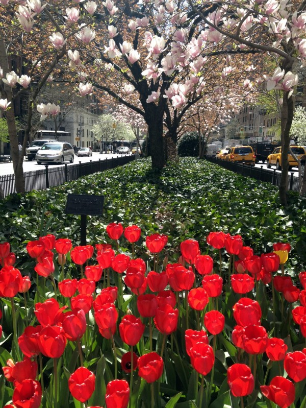 Park Avenue in spring glory