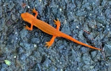 9-2 newt closeup