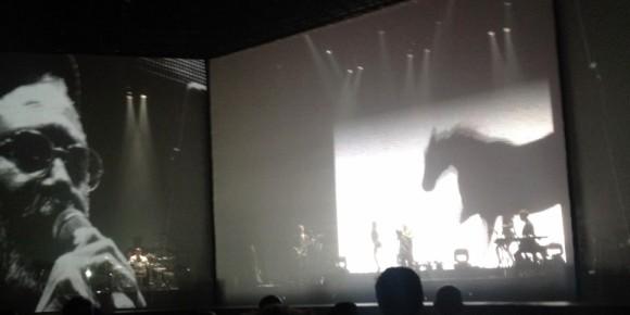 9-28 horse shadow