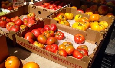 9-7 tomatoes 2