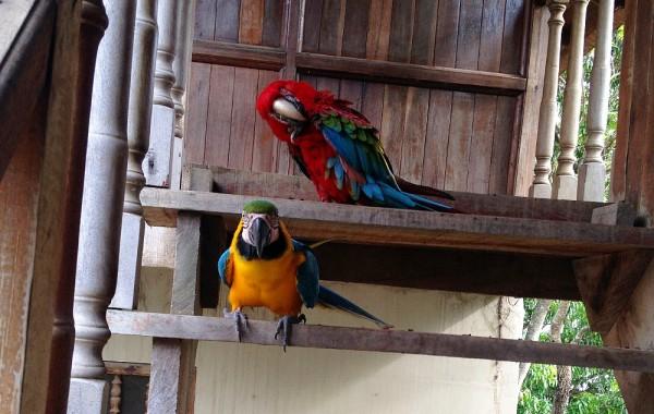 10-4 macaws
