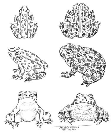 frogsandtoads-illo2