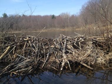 4-27 beaver dam