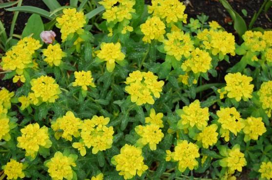 5-9 yellow