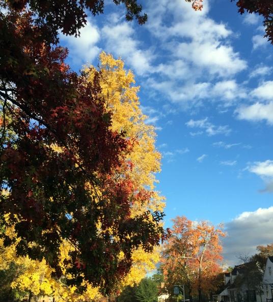 11-7 fall colors 3