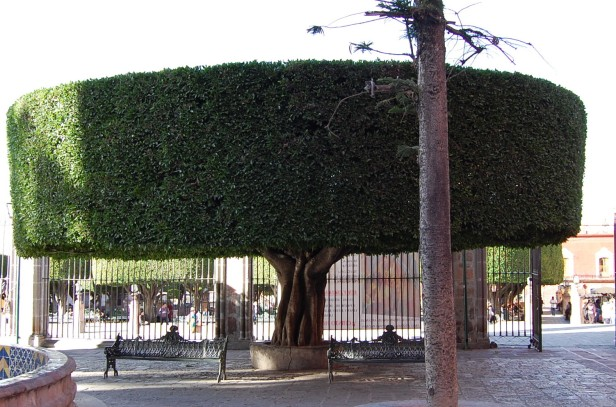 1-29 typical topiary