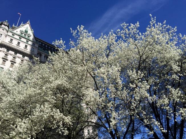 4-25 plaza springtime