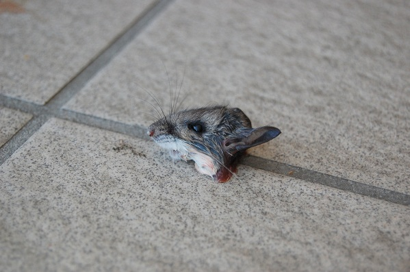 2-27 mouse closeup