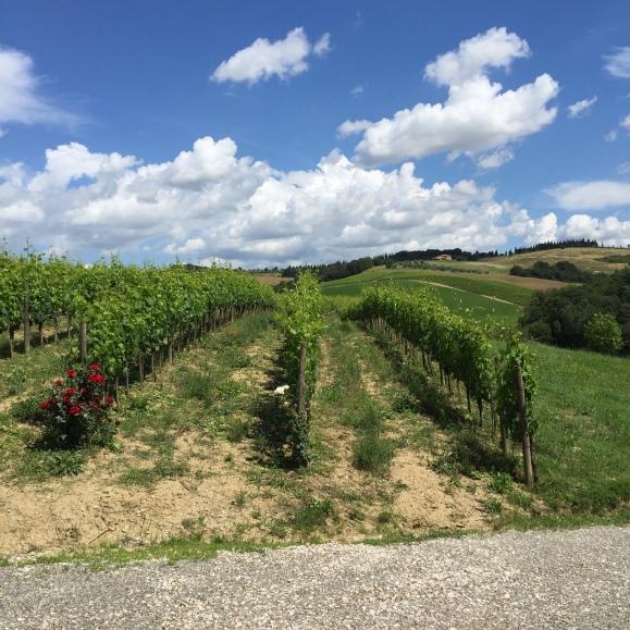 6-13 tuscan vineyard