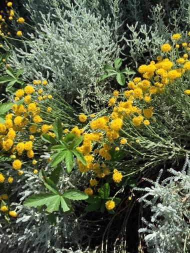 6-15 herb garden