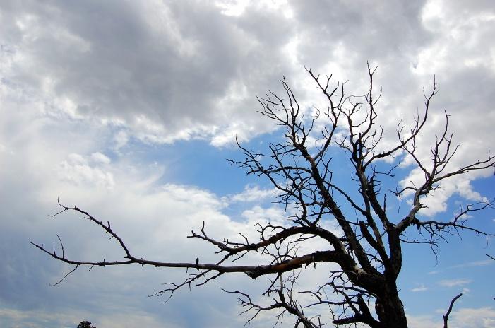 8-2 dead tree silhouette