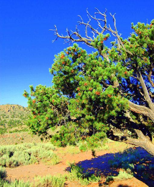 8-2 medicine tree