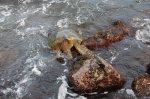 2-15 sea turtle2